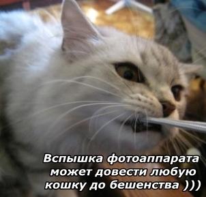 Злобная Мишель)))