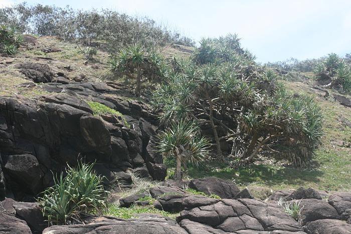 Oстров Фрейзер — объект всемирного достояния человечества и самый большой песчаный остров в мире. 61673