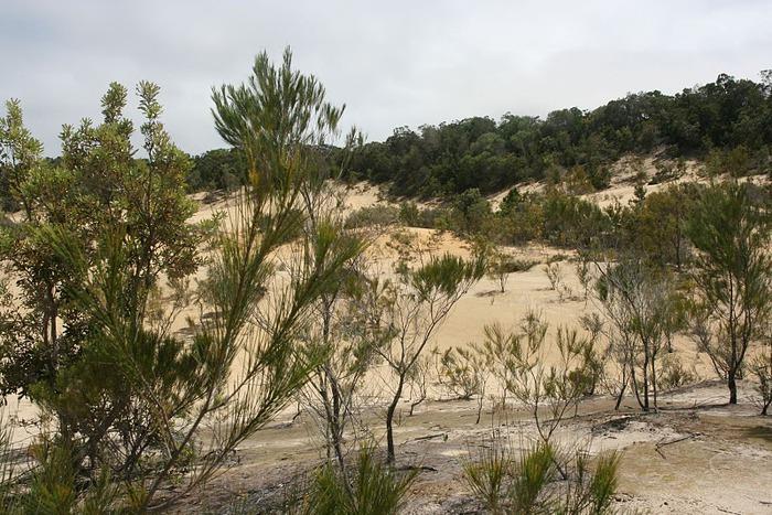 Oстров Фрейзер — объект всемирного достояния человечества и самый большой песчаный остров в мире. 21799