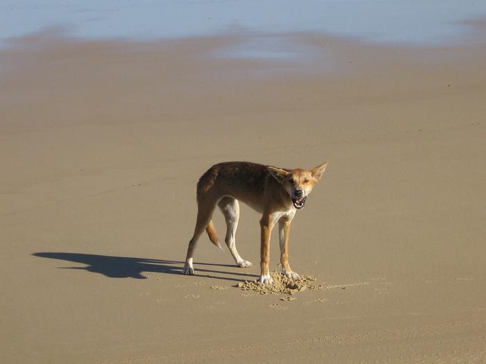 Oстров Фрейзер — объект всемирного достояния человечества и самый большой песчаный остров в мире. 97621