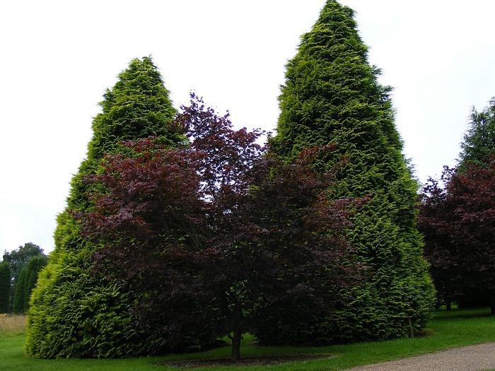 Nymans Gardens 48016
