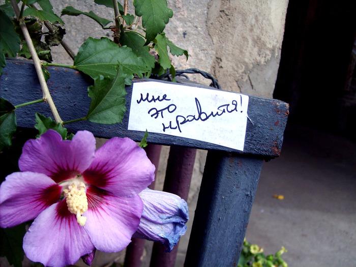 монолог с городом, бумажки с надписями, Порочные Связи, цветок, мне нравится