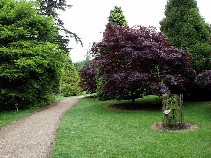 Nymans Gardens 38121