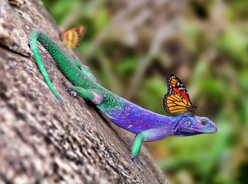ящерица и бабочка маскировка