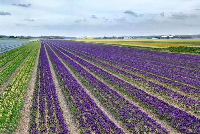 С золотого поля на Херсонщине собрали первый урожай