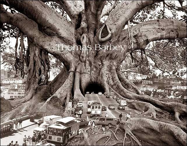 Волшебный мир фотохудожника Thomas Barbey 49
