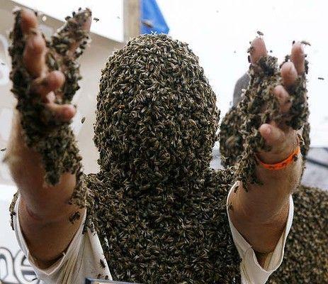 Конкурс лучшей «бороды» из пчел прошел в Канаде 47064