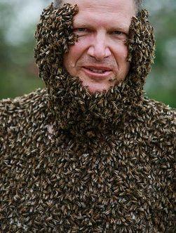 Конкурс лучшей «бороды» из пчел прошел в Канаде 24729