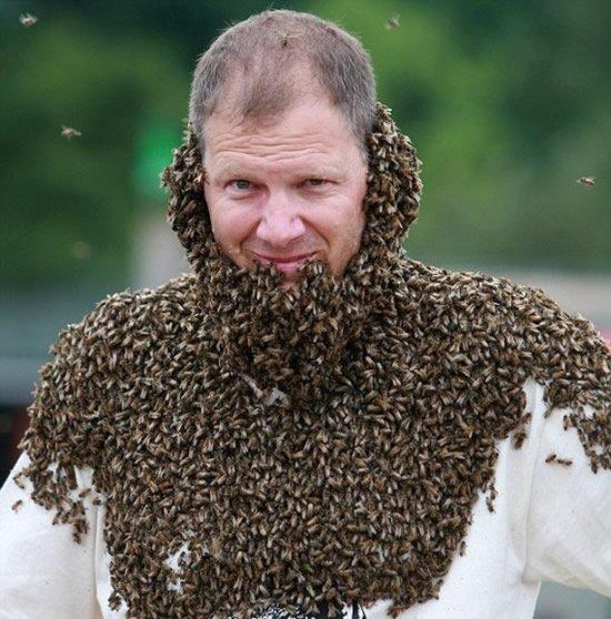Конкурс лучшей «бороды» из пчел прошел в Канаде 20646