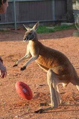 Домашний кенгуру 3