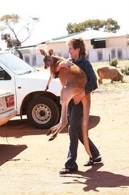 Домашний кенгуру 6