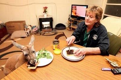 Домашний кенгуру 12