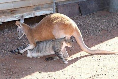 Домашний кенгуру 16