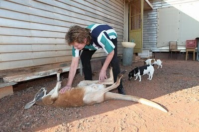 Домашний кенгуру 24