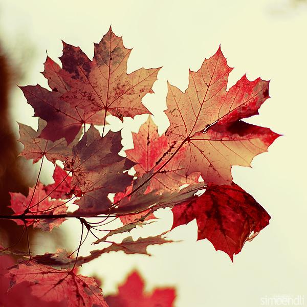the_magic_of_autumn__by_simoendli (600x600, 368 Kb)