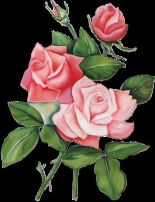Картинки красивые нарисованные розы