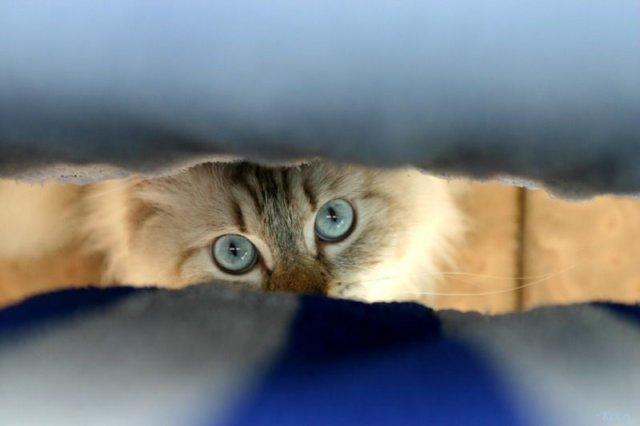 Картинки по запросу Народные поверья о кошках