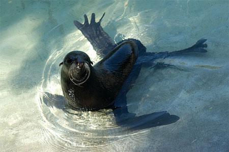 Картинки по запросу купающиеся животны