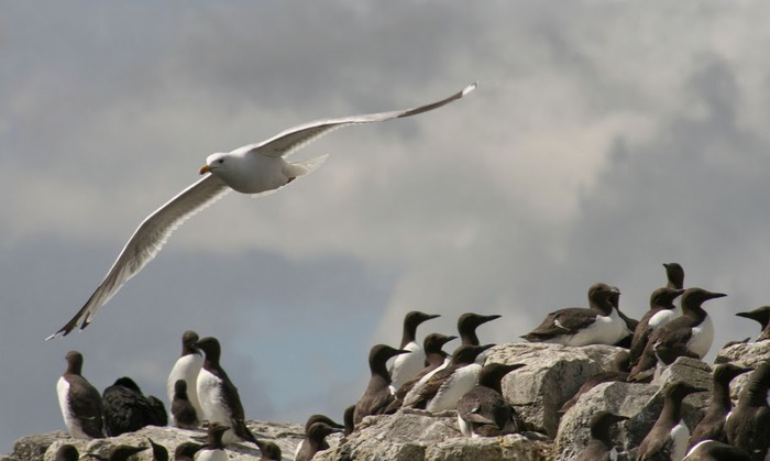 Farne Islands 85367