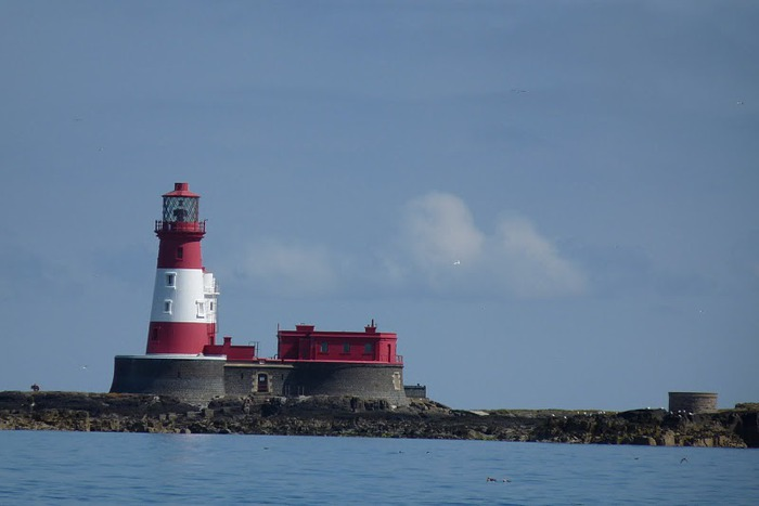 Farne Islands 12112