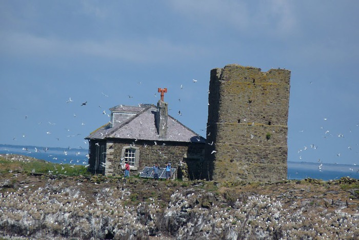 Farne Islands 90317