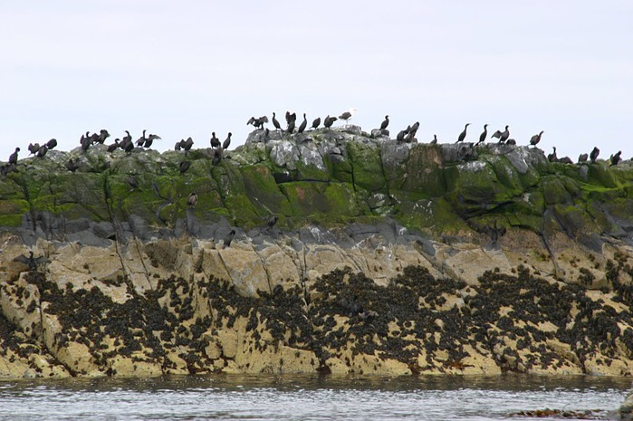 Farne Islands 72298