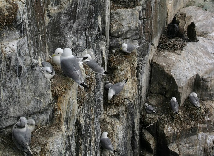 Farne Islands 91536