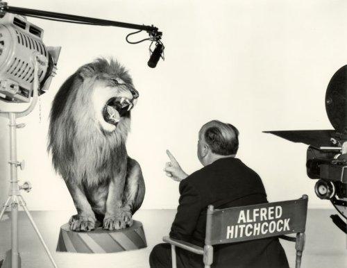 Альфред Хичкок снимает льва для известной заставки MGM