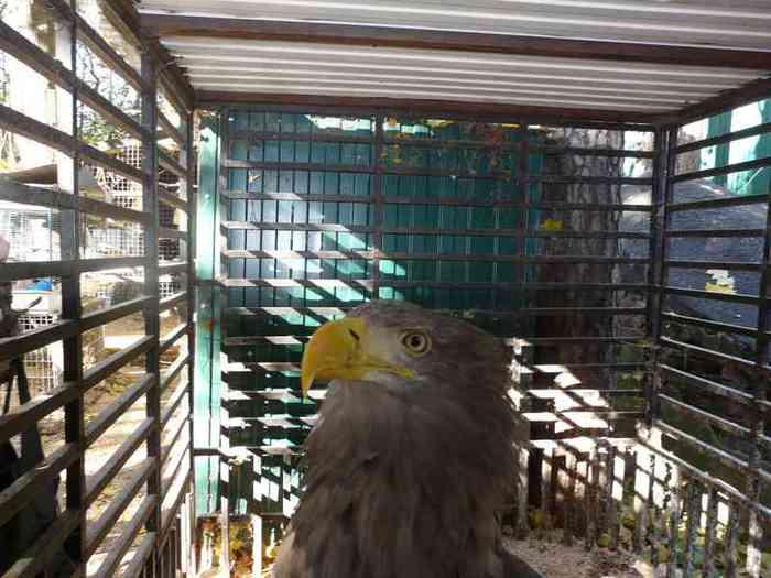 Приют для птиц под Москвой