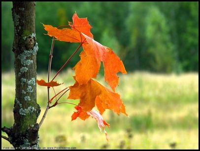 100 красивейших осенних пейзажей 95