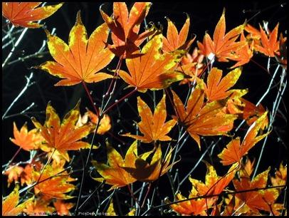 100 красивейших осенних пейзажей 85