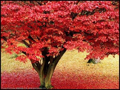 100 красивейших осенних пейзажей 80