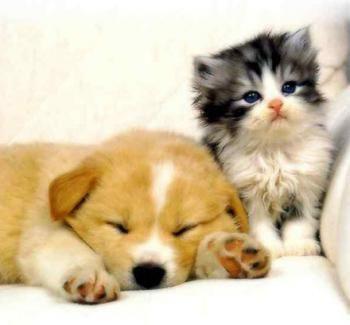 Счёт: Кошки 5 – Собаки 5....