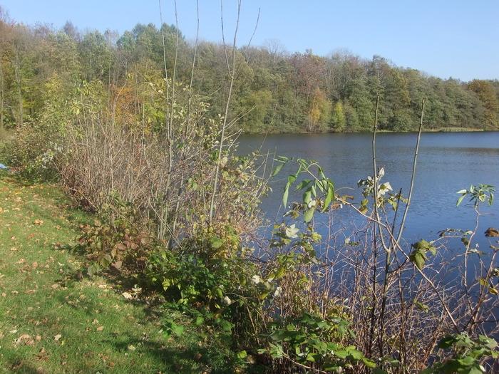 Осенний денёк на озере в Лангенау, Саксония 18175