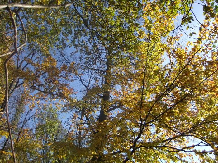 Осенний денёк на озере в Лангенау, Саксония 93556