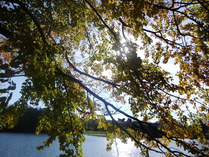 Осенний денёк на озере в Лангенау, Саксония 67884