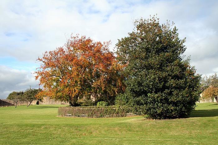 Barnard Castle - Замок Барнард 83329