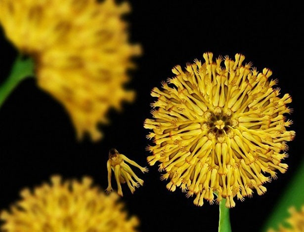 Креативные цветы из людей 4