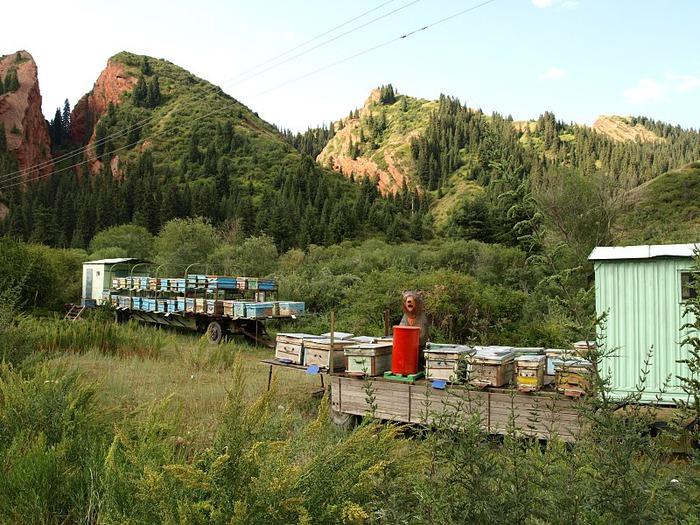 Киргизия-Фотозарисовки. 78641