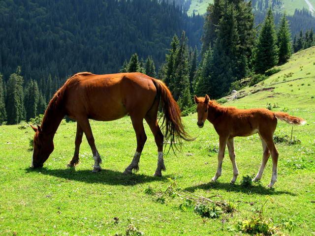 Киргизия-Фотозарисовки. 51313