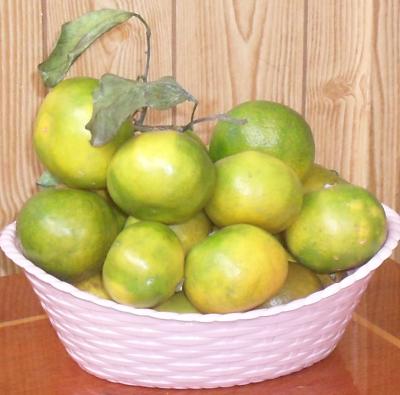 (400x395, 397Kb)Абхазский мандарины еще зеленоватые. Собственно, они до полной яркости почти не желтеют