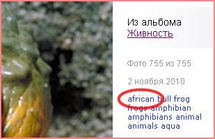 Лягушка бык с мышонком во рту (фото)