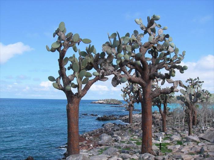 Галапагосские острова 11273