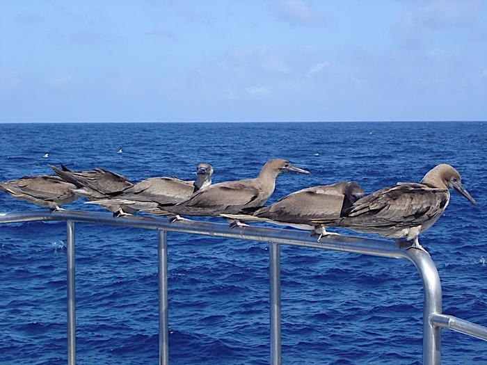 Галапагосские острова 92644