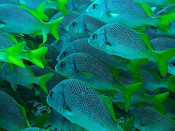 Галапагосские острова 40354