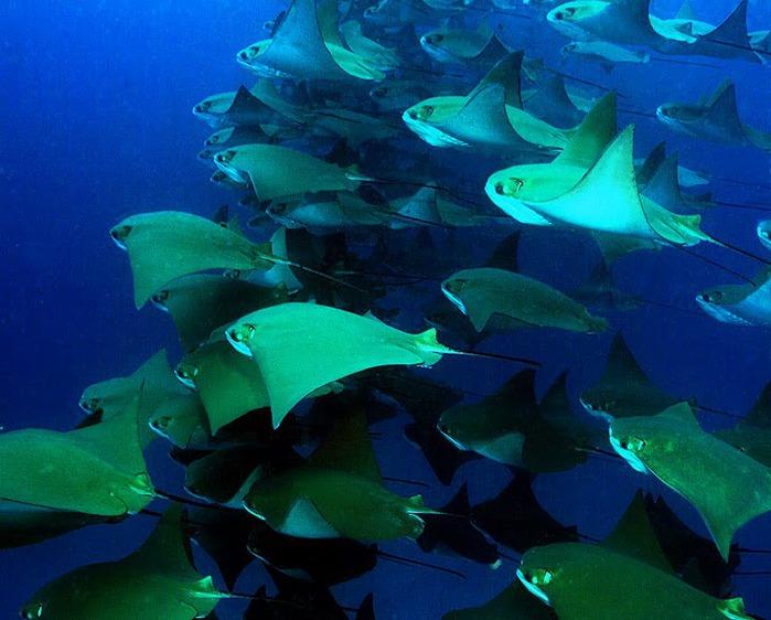 Галапагосские острова 35499