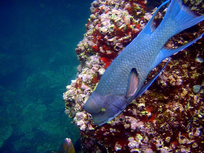 Галапагосские острова 97232