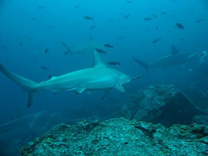 Галапагосские острова 50431