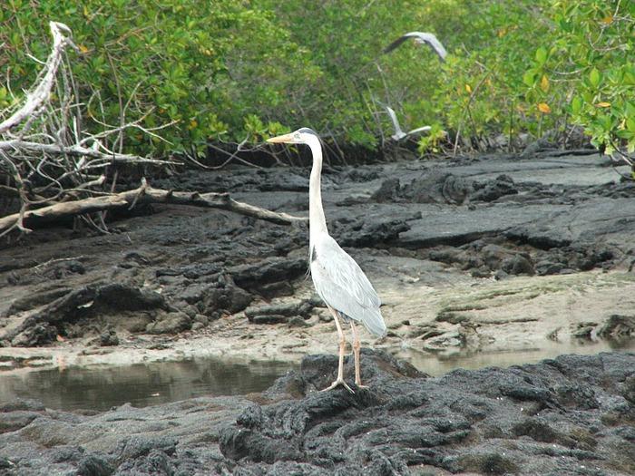 Галапагосские острова 95037