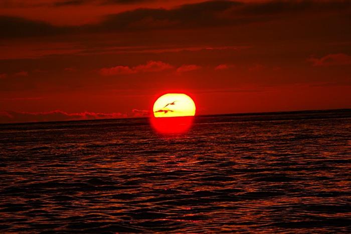Галапагосские острова 48341